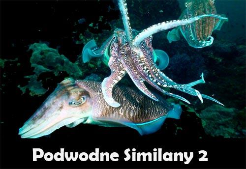 Podwodne Similany 2 (2011) PL.TVRip.XviD / Lektor PL