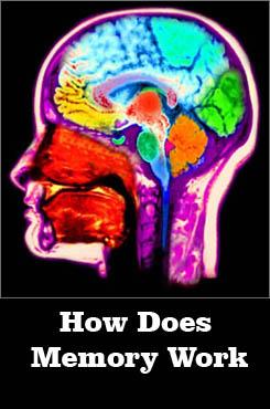 Jak Działa Nasza Pamięć / How Does Memory Work (2009)