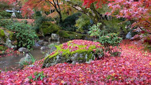 宝厳院の紅葉3