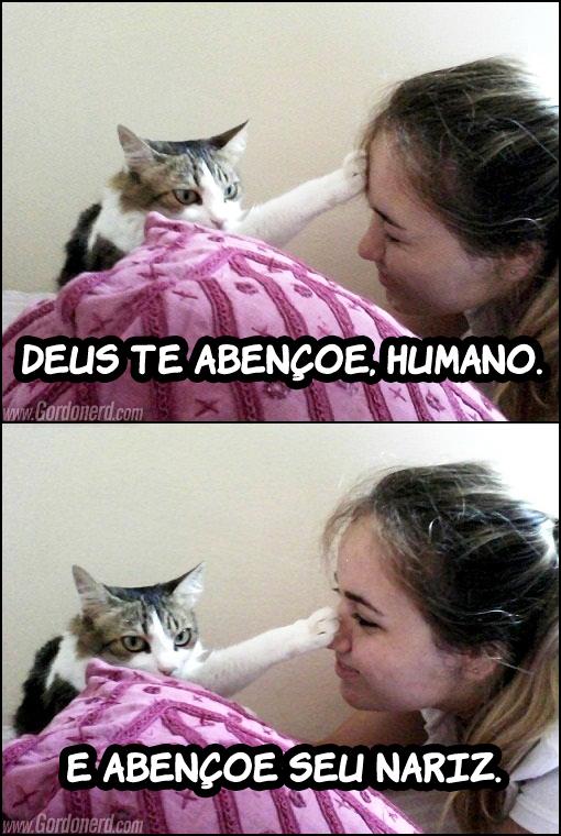 deusteabencoehumano Bênção felina