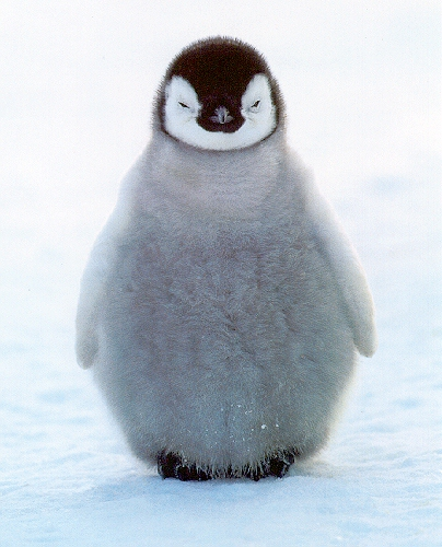 Help the PENGUINS!!!