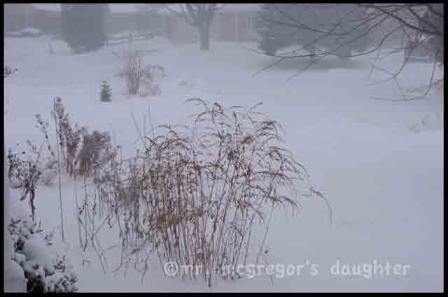 Not Just a Lot of Snow*: Groundhog Day Blizzard