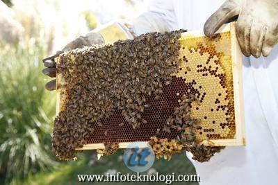 Memperkerjakan karyawan peternak lebah