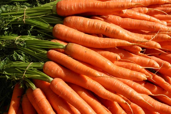 History Of Carrot