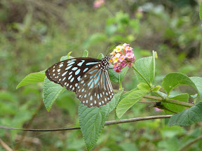 Ceci est un papillon