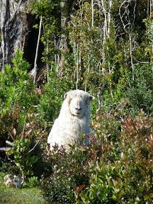 Mouton à l'air très éveillé