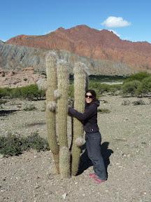 Le cactus copain