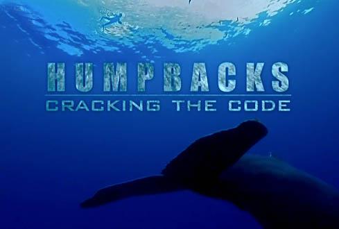 Tajemnice Kodu Wieloryb�w / Humpbacks Cracking The Code (2008) PL.TVRip.XviD / Lektor PL