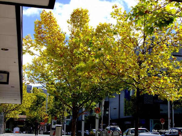 Bunda street leaves
