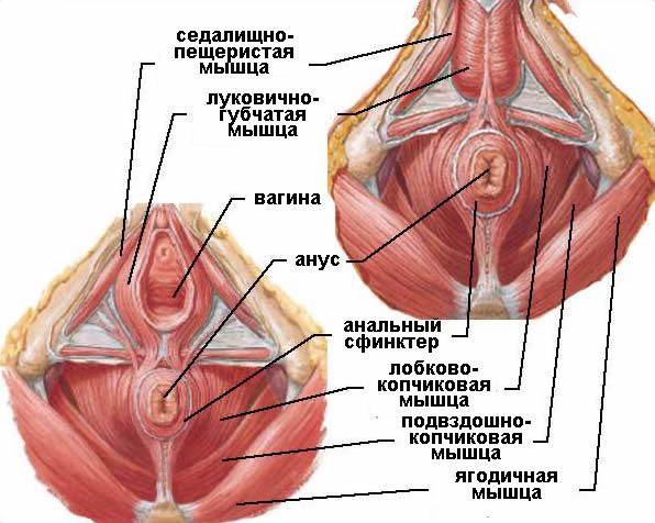 gimnastika-dlya-stenok-vlagalisha