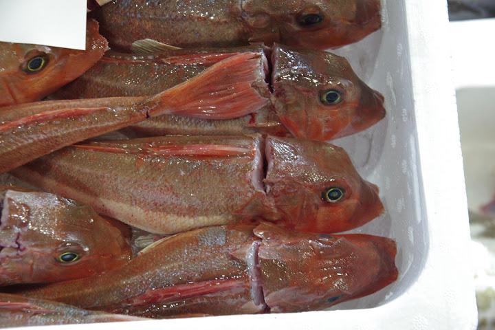 写真:鮮魚たち