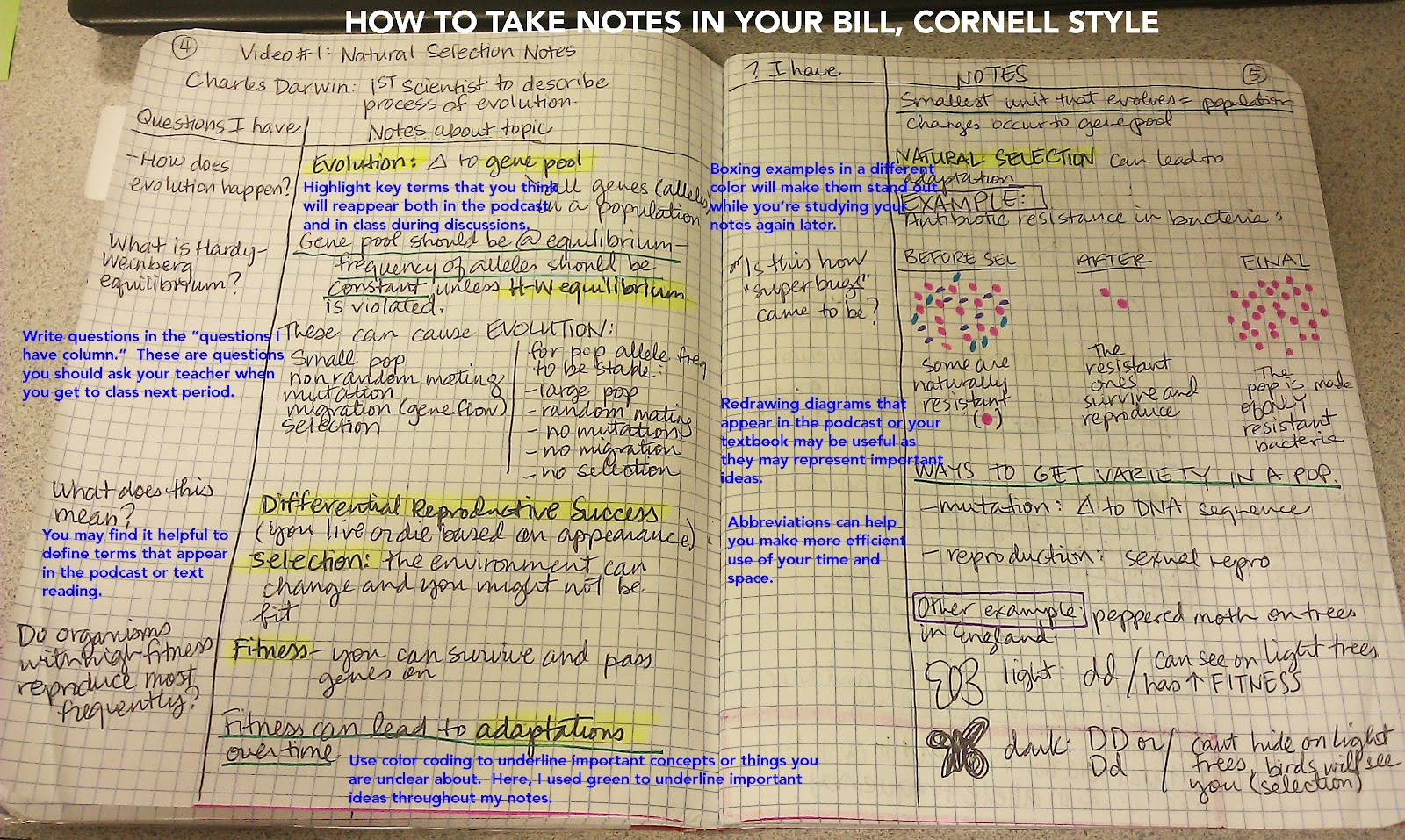cornell notes book report