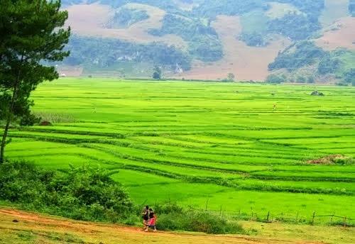 1 Du lịch Mộc Châu: ngút ngàn rừng thông Bản Áng
