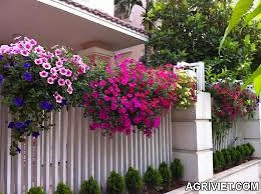 Agriviet.Com-images_%25281%2529.jpg