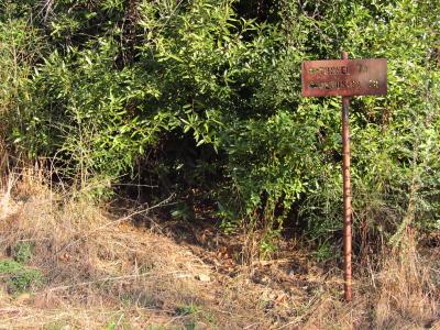 fire surviving sign
