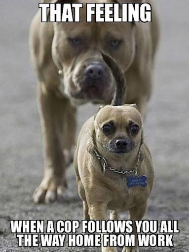 dog-16-2014-02-17-08-12.jpg
