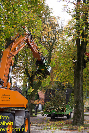 Bomen gekapt Museumlaan in overloon 20-10-2014 (14).jpg