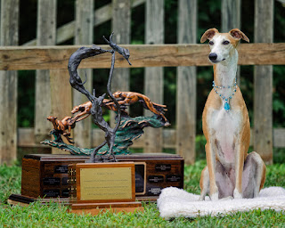 Spirit - 2010 - #1 Whippet and Sighthound AKC Lure Coursing and 2010 AKC National Field Champion