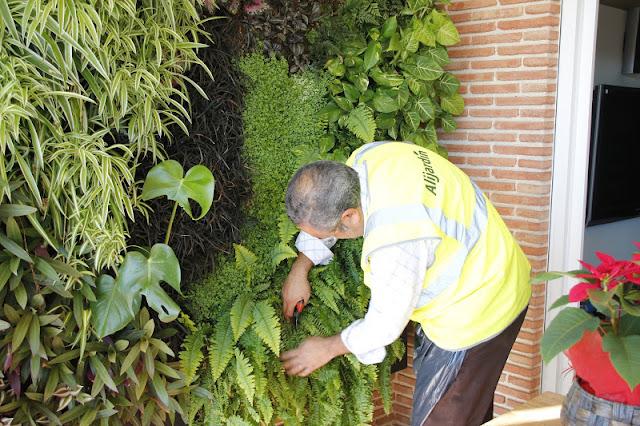 Mantenimiento de jardín vertical en Barcelona