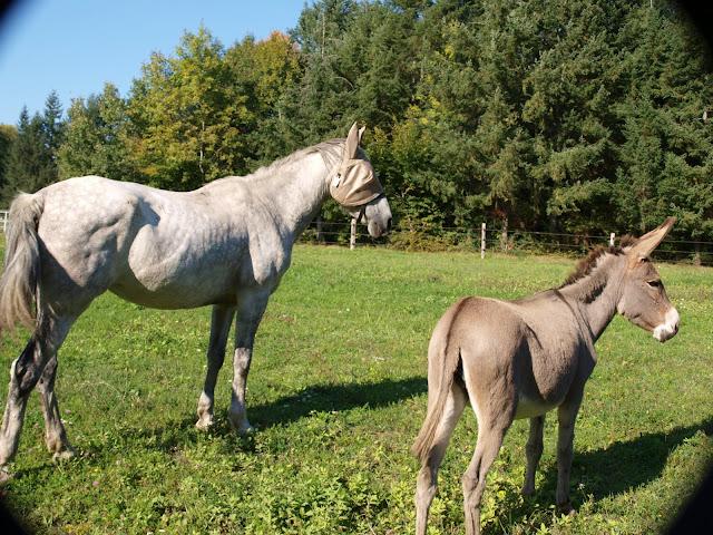 POMMELEE D'AMOUR - ONC Selle née en 1992 - Adoptée en juillet 2011 par Shamane - Page 3 PA025586