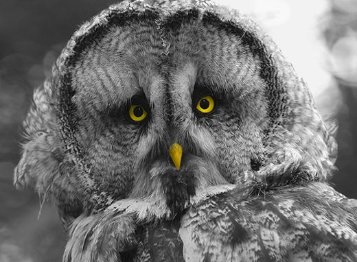 Animalphotos23 in 50 Superb Examples of Animal Photography