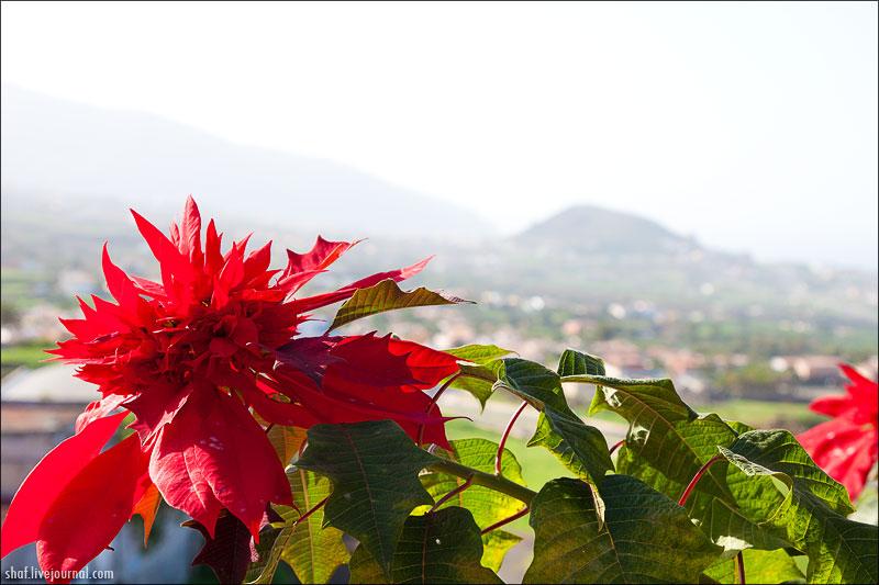 http://lh5.googleusercontent.com/--MXcmoMtOhg/UNt9SZoIjOI/AAAAAAAAEG4/L6q8Ey2qtDI/s800/20081221-161003_Tenerife.jpg
