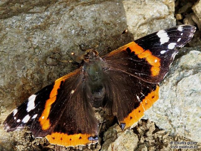 fluturele pe stanca