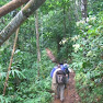 Borneo rainforesttrekking #3.jpg