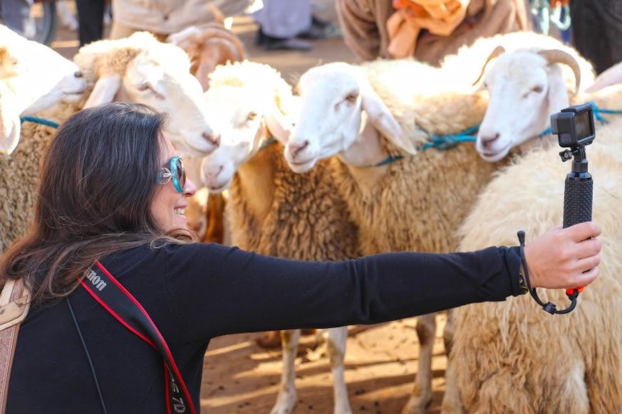 Visitar DOUZ e o seu mercado de gado, local de passagem de caravanas de camelos | Tunísia