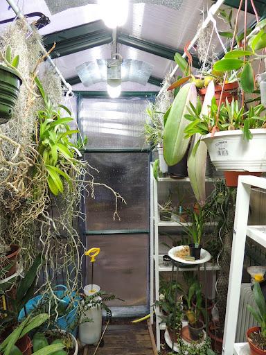 Lamentable armoire à orchidées DSCN1210