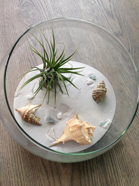 diy-terrarium-tillandsia