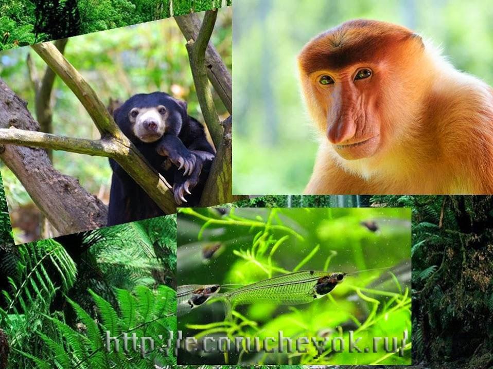 Животные экваториального леса