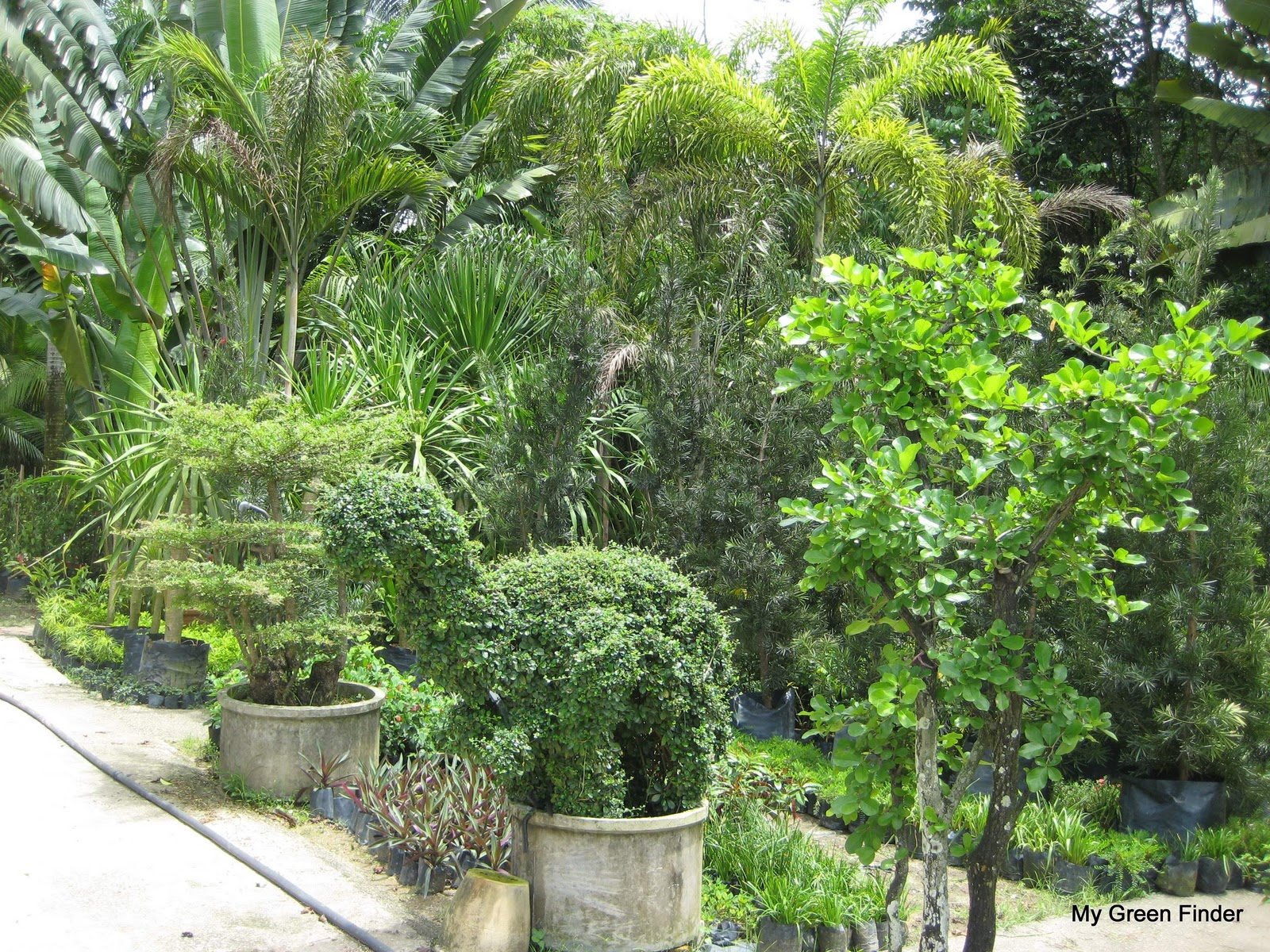 MY GREEN FINDER | Plant Vendors: SMM Landscape Sdn Bhd