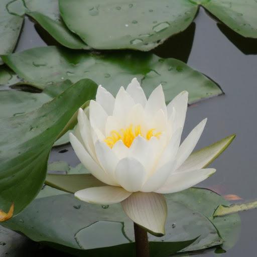 Wei Kuang