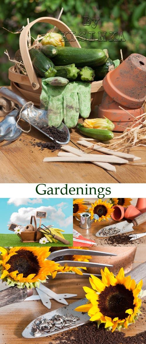 Stock Photo: Gardenings