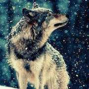 снятся волки