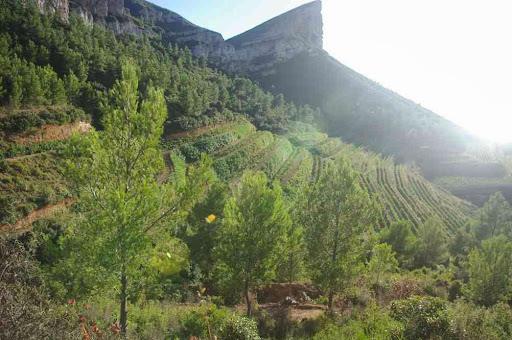 Petite montée pépère à travers les vignes