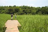 湿地観察点