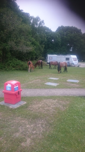Ocknell Campsite New Forest at Ocknell Campsite New Forest