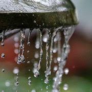 сонник холодная вода