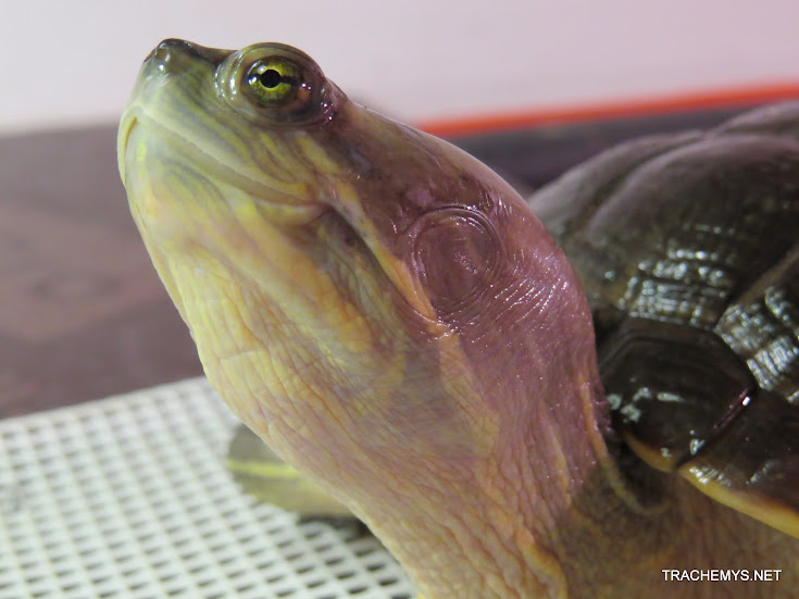 mes tortues (BK) - Page 11 IMG_2188
