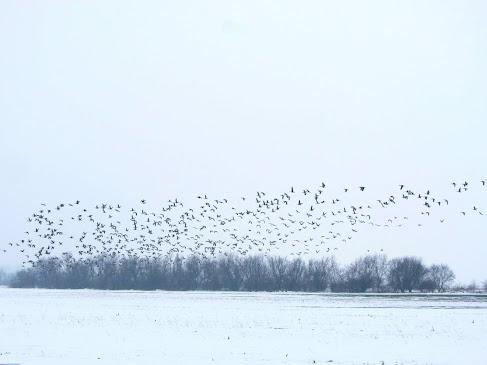 Vögel schauen im St Martins