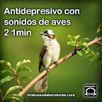 Antidepresivo con sonidos de aves – 21min
