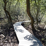 Buffalo Creek Mangrove walk (345184)