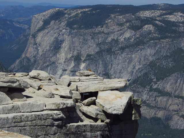 marmot on the diving board