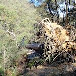 Fallen tree on Defile Track (206815)