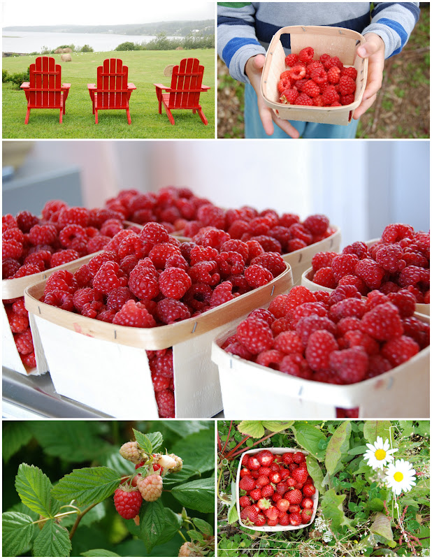 raspberry and strawberry picking in Newfoundland