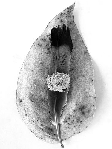 still nature photos, still life, black and white, fotografias de natureza morta, ruimnm