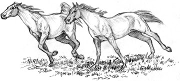 Horse Running Drawing Quail Gallery Pencil Drawing is Always Fun