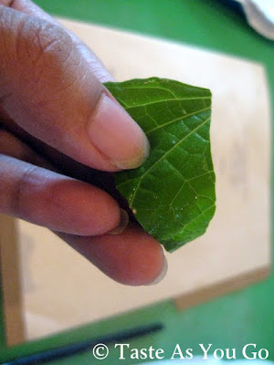 Hoja Santa Leaf at Los Tamarindos in Los Cabos, Mexico - Photo by Taste As You Go